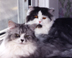 The cats: Shelby and Dreyfus